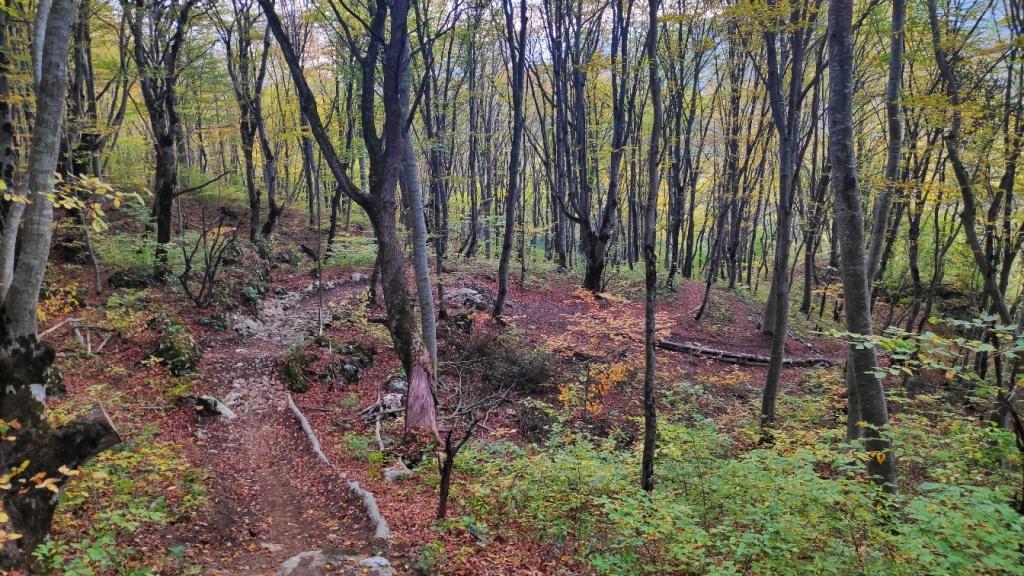Личный блог: Анонс гонки в ДХовской, 2-3 ноября