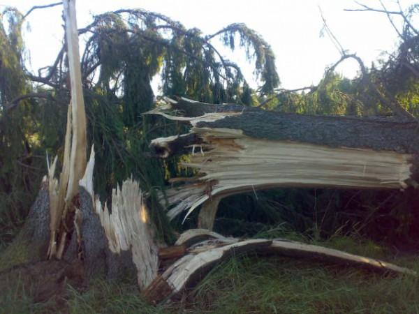 Вот какой силы был ураган