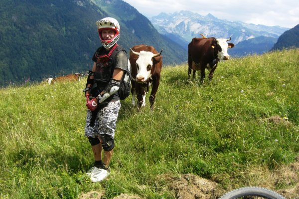 Про коров в Морзине!))