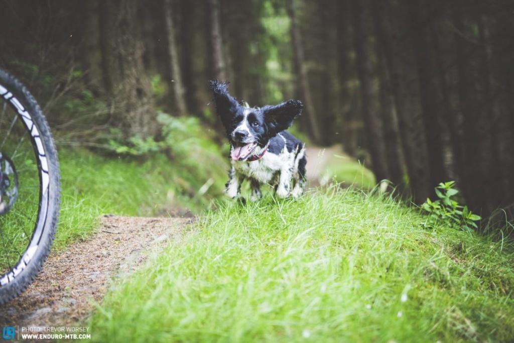 Ремонт и настройка: Как обслуживать свою трейловую собаку