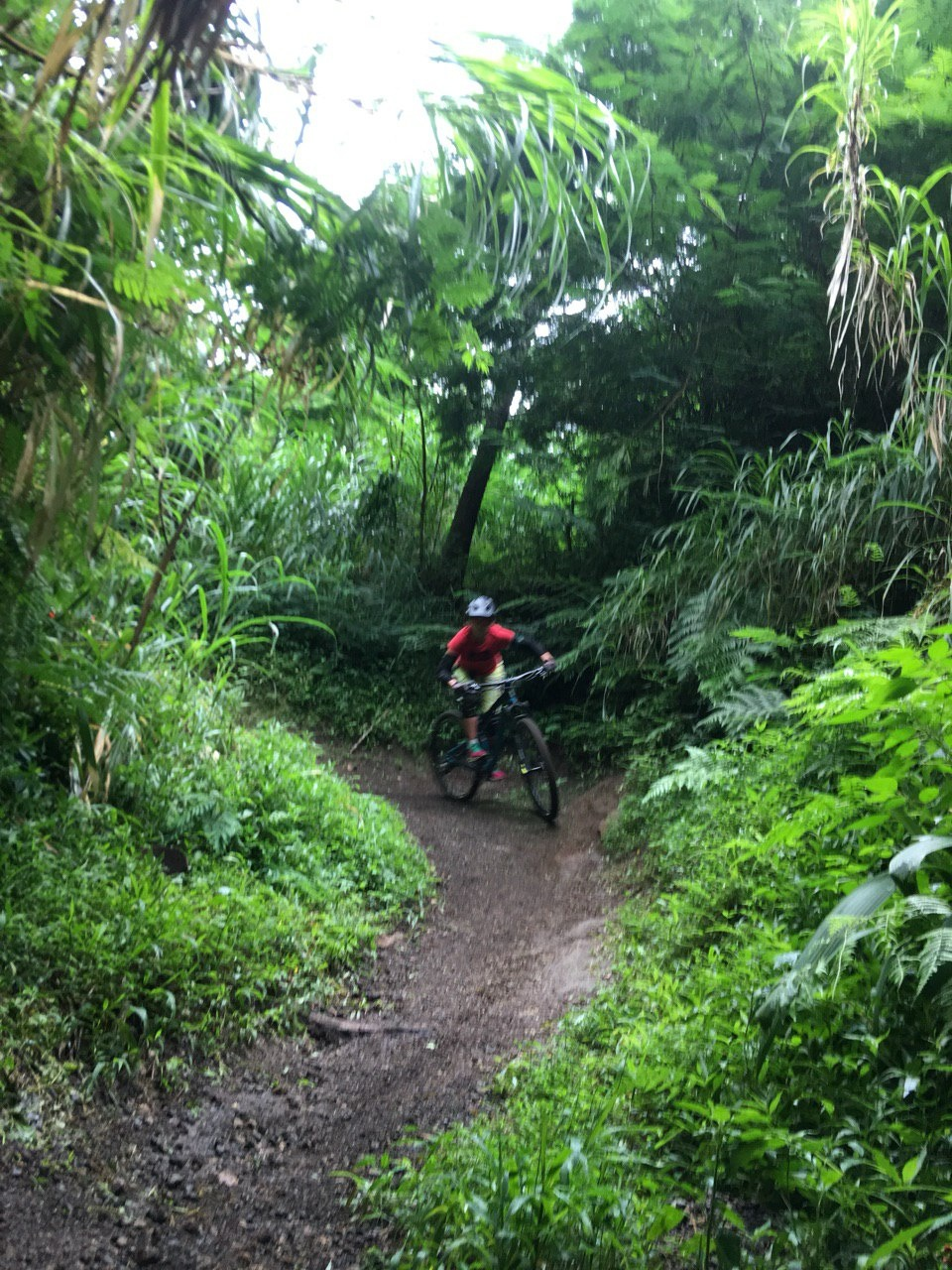 Блог им. CrazzyKat: Маунтинбайк на Бали вместо серфинга!